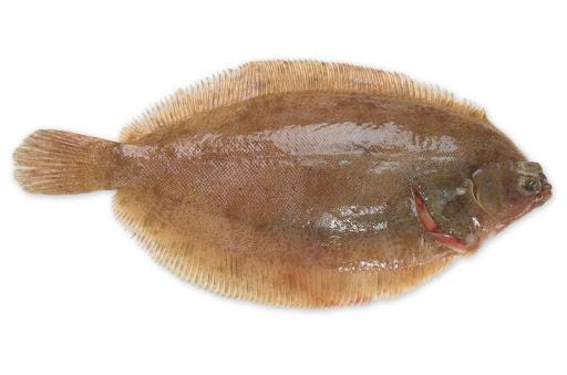 hai mắt cá thờn bơn nằm về cùng một phía