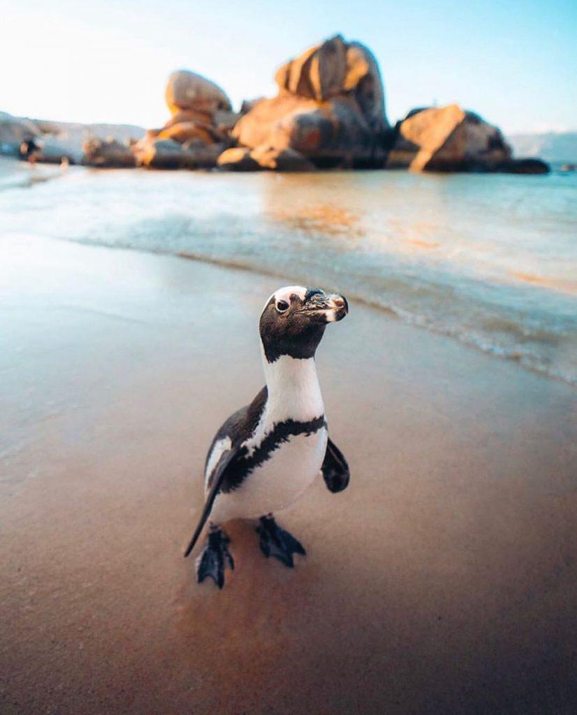 chim cánh cụt sống ở Nam Cực