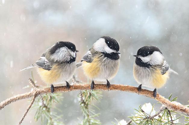 chim ngủ trên cây không bị té