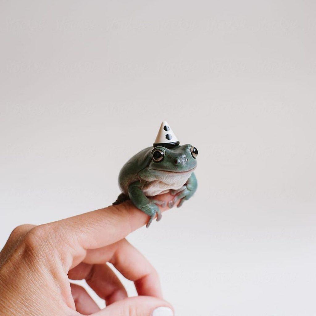 con ếch đực kêu rất to