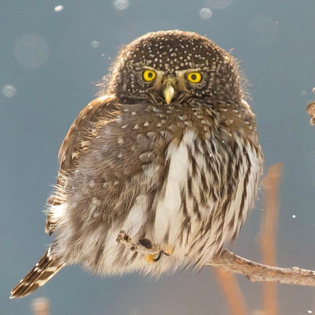 mắt chim cú mèo có thể nhìn rõ vào ban đêm