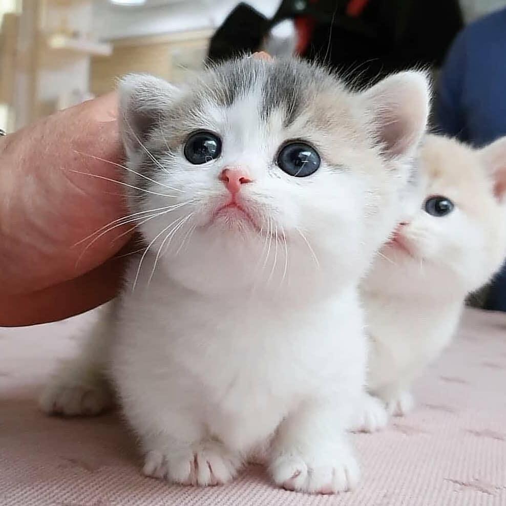 từ cùng một mẹ đẻ ra nhưng có những con mèo có màu sắc khác nhau