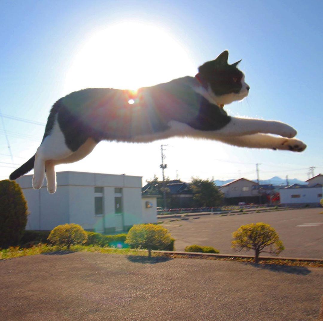 mèo rơi từ trên cao xuống nhưng không sao