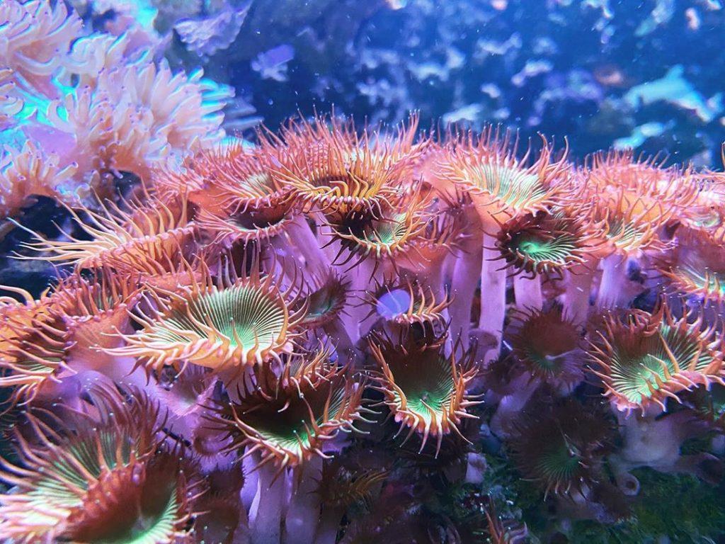 san hô là loài động vật bậc thấp