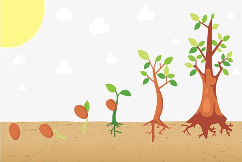 sóng siêu âm thúc đẩy quá trình sinh trưởng của thực vật