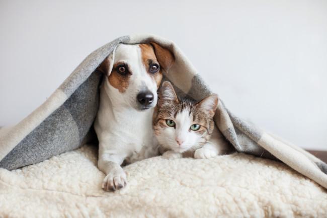 chó thông minh hơn mèo