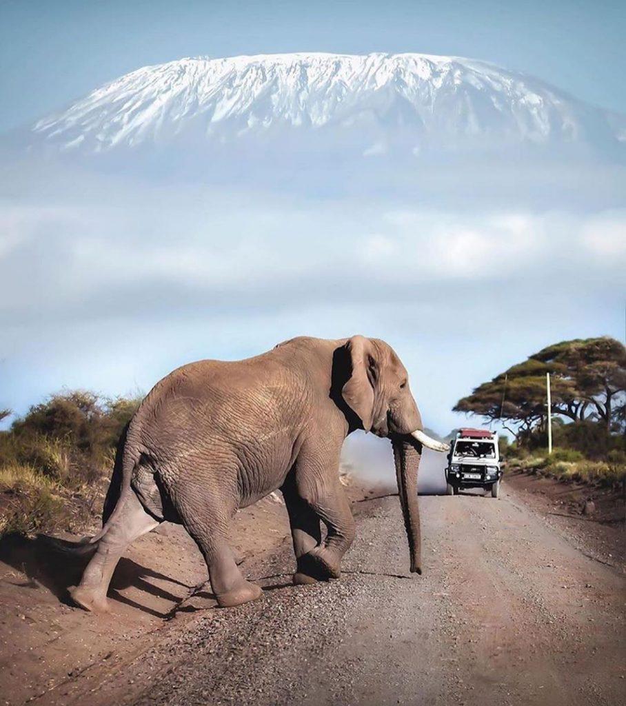 con voi thích đắp bùn